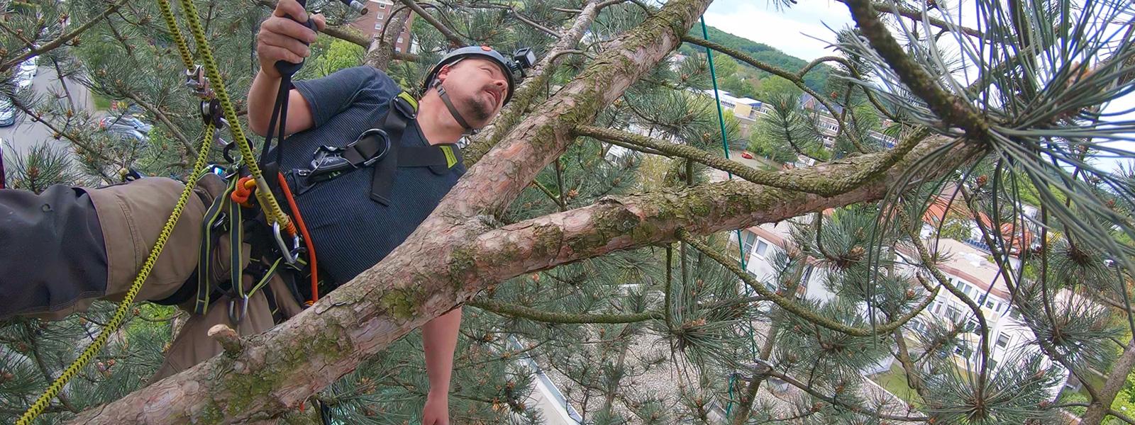 Tierrettung vom Baum - Katzenretter - Höhenrettung